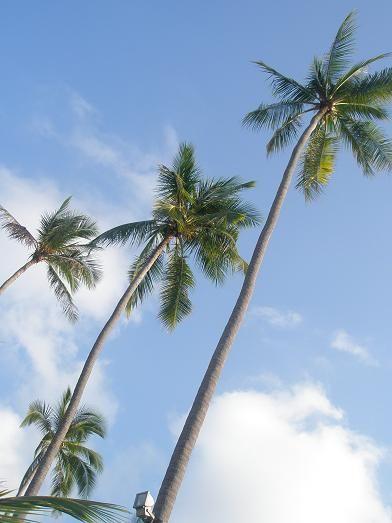 サムイ島21
