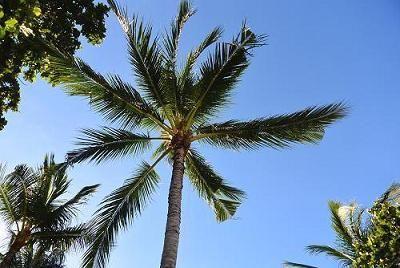 サムイ島の美しいビーチ2