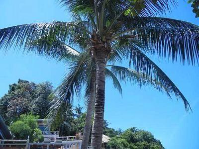 サムイ島の写真26