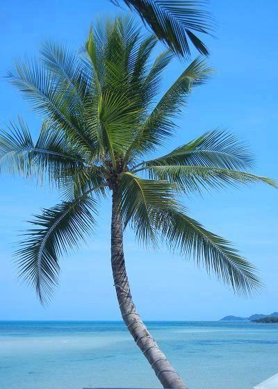 サムイ島カンダブリのビーチ14