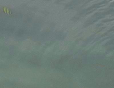 サムイ島の写真014_2